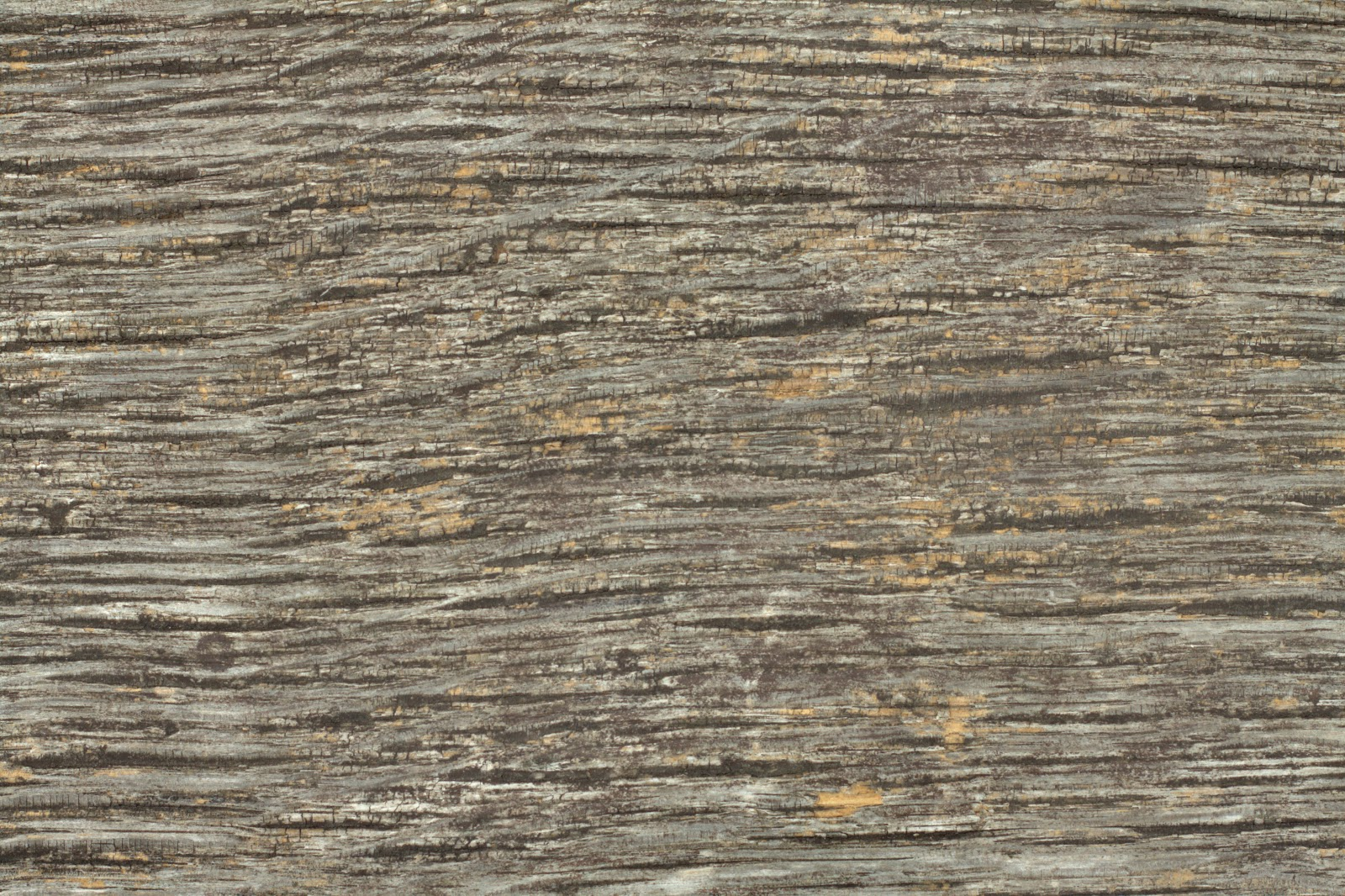 Wood dry cracked bench plank tree bark texture ver 10