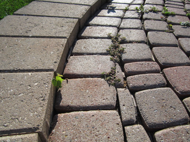 If The Paving Stones, Wall Blocks, And Caps Are Loose Or Drastically  Shifted, Then The Paver Patio Is In Much Need Of Attention.