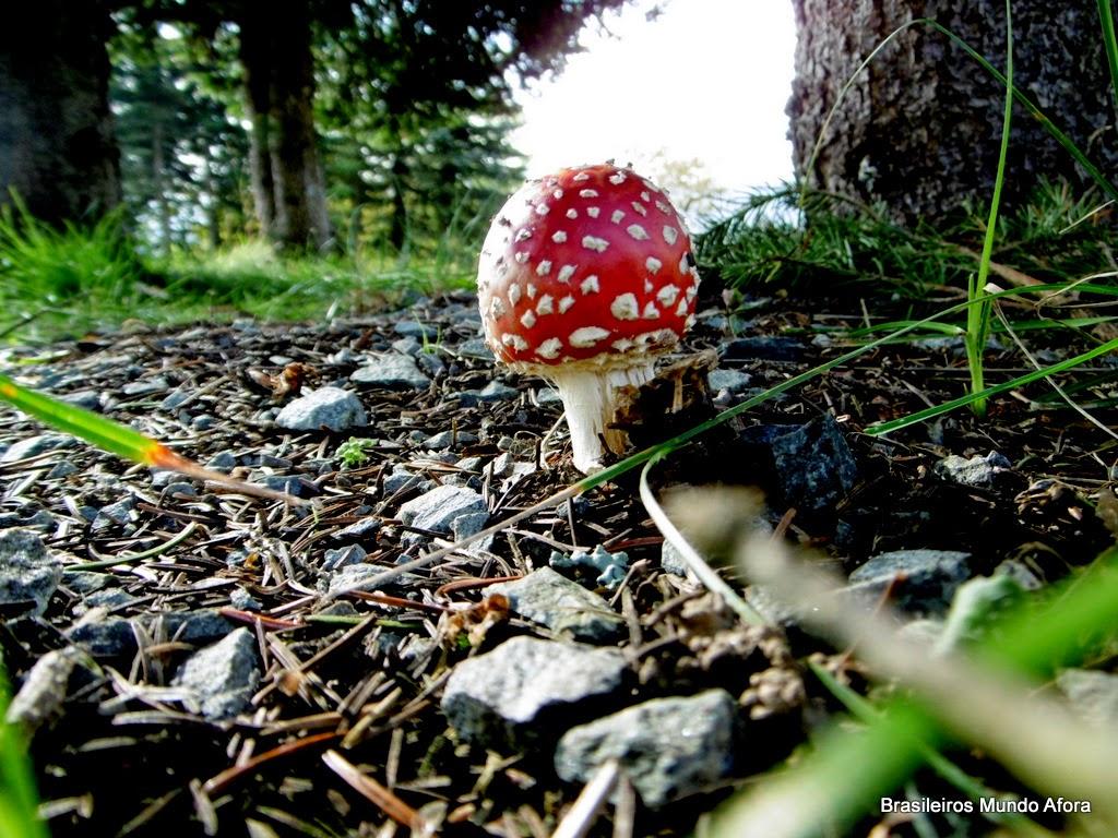 Os fascinantes cogumelos da Alemanha