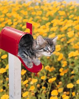 Kitten in mailbox
