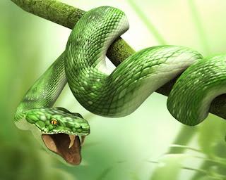 3D Green Snake HD Wallpaper