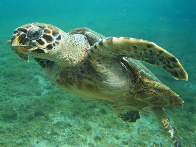Imag Paisaje Animales Costa Rica_1