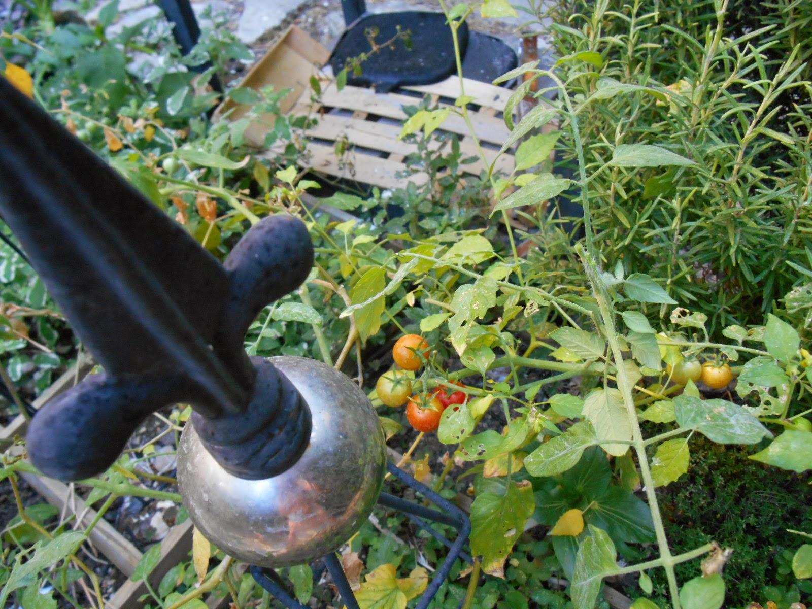 Le jardin de pascaline recette tarte la tomate cerise - Que faire avec des tomates du jardin ...