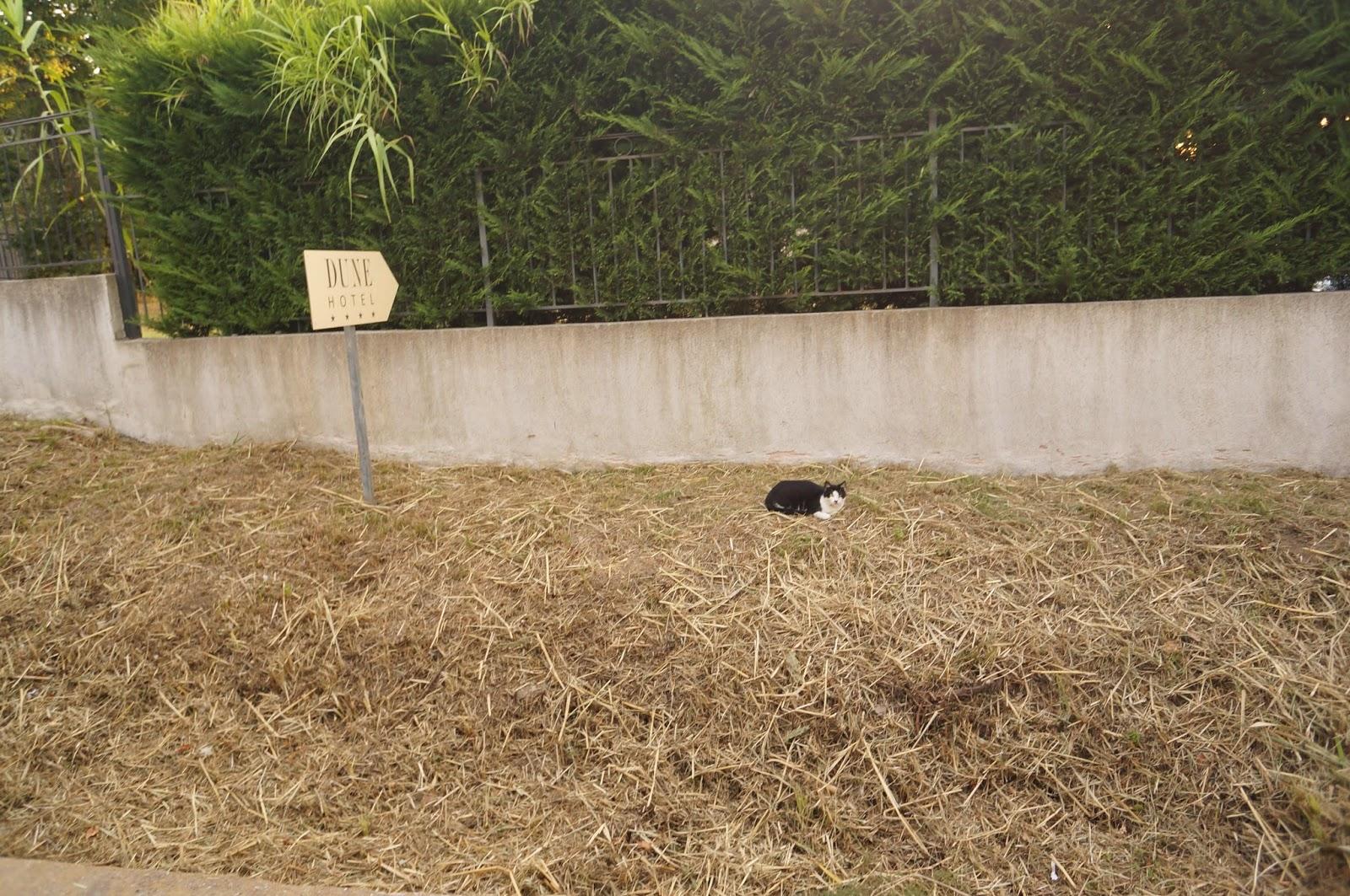 Кот в Сен Тропе