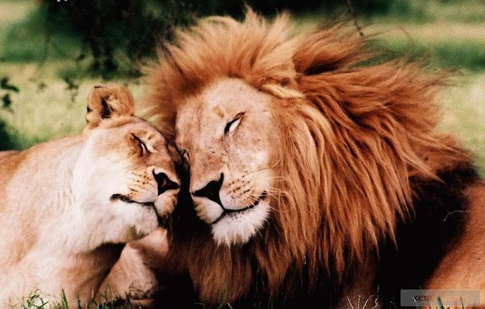 Animal Loves - Animals In Love