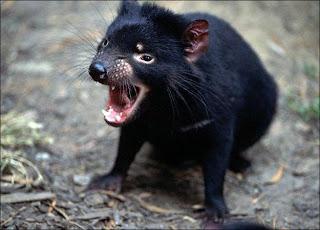 binatang setan
