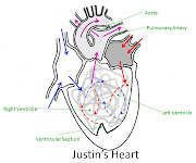 . the body. Between the two sides of the heart, separating the .