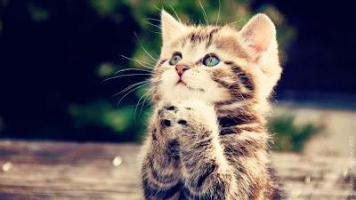 gambar kucing lucu berdoa