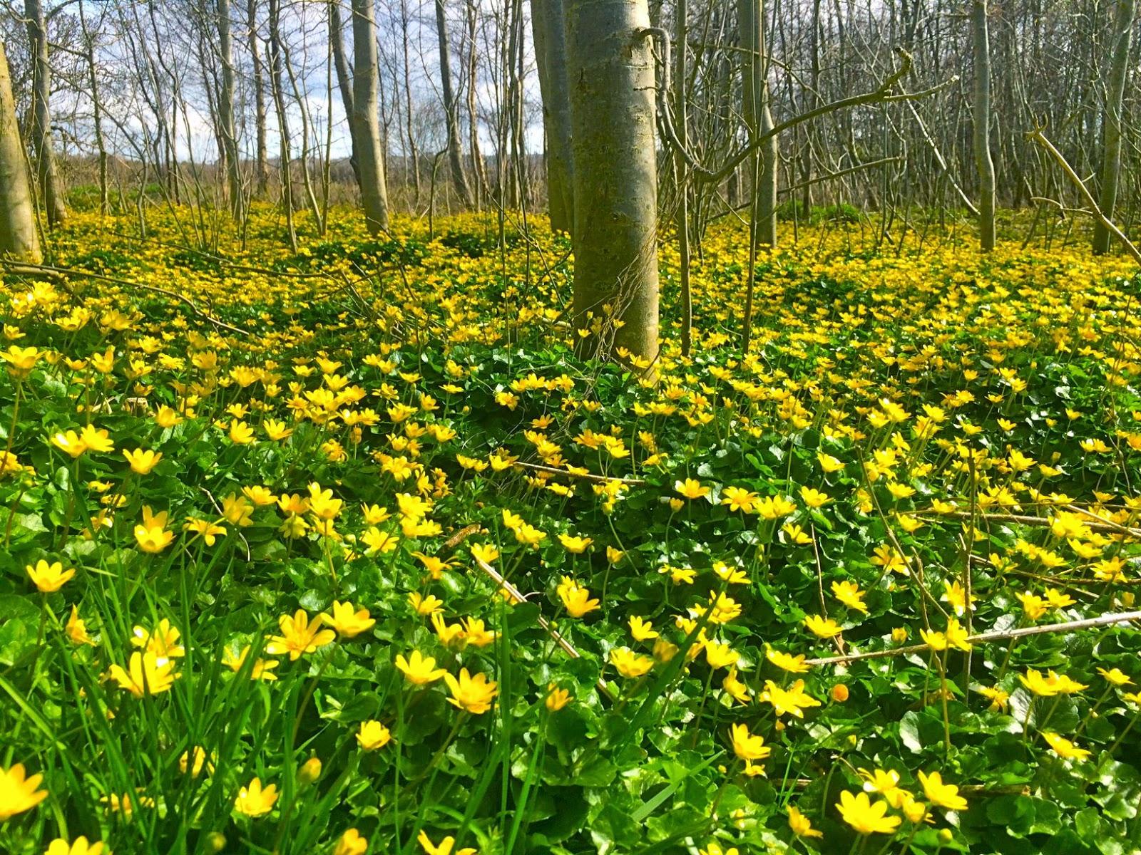 Terryland Forest Park Flowers