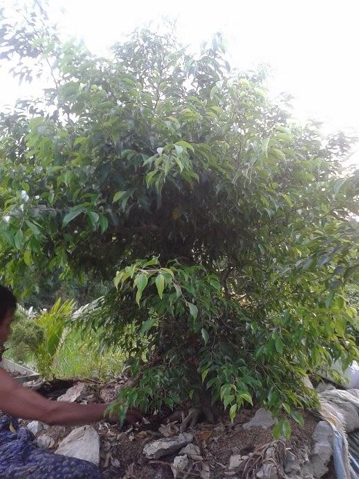 Cay Canh Dep, Cay Canh Dep Cây xanh núi P12 - 2