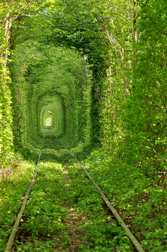 wallpapers of nature - green tunnel