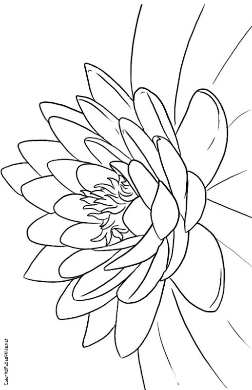 Lotus Flower Coloring Pages title=