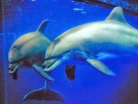 Miroir des dauphins