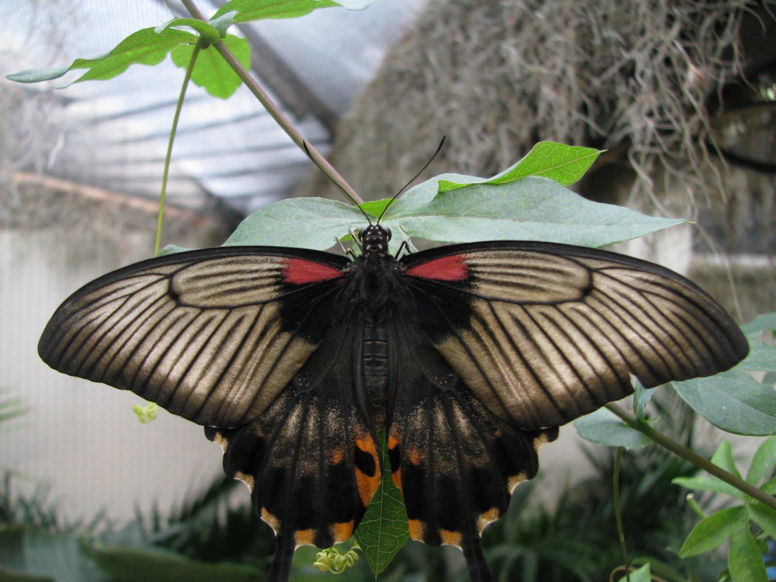 Diane b l o g en passant par la vall e papillons en for Jardin hamel papillon 2016