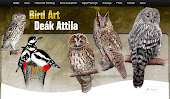 BIRD ART -DEAK ATTILA