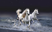 #9 Horse Wallpaper