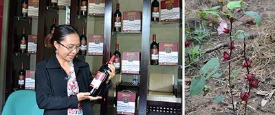Rượu hoa bụp giấm