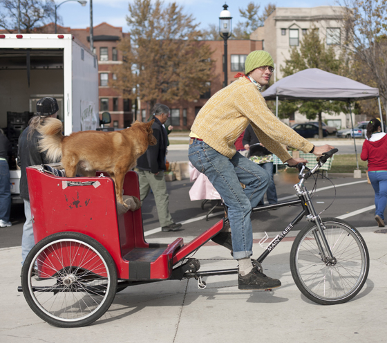 How Can I Carry My Dog On My Bike