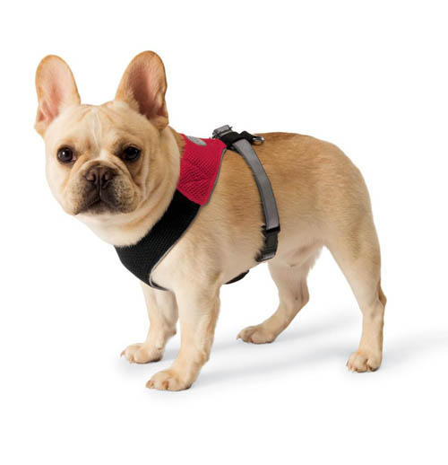 The Upper Paw: Collars vs Harnesses: Which is Best?