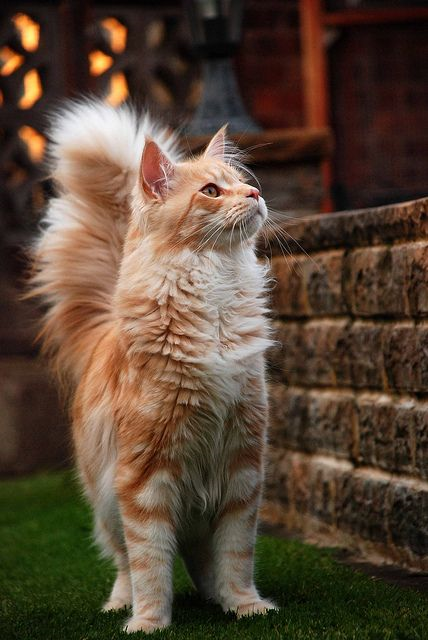 Top 5 Best Cat Breeds