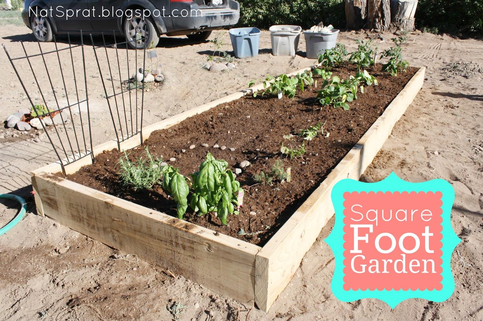 NatSprat: My Square Foot Garden {Yee-haw!}