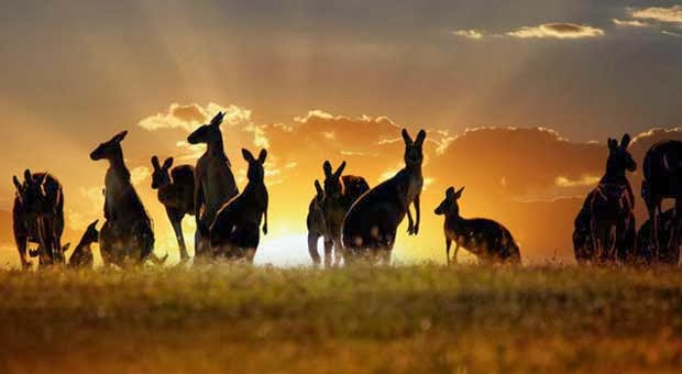 10 Keunikan Australia