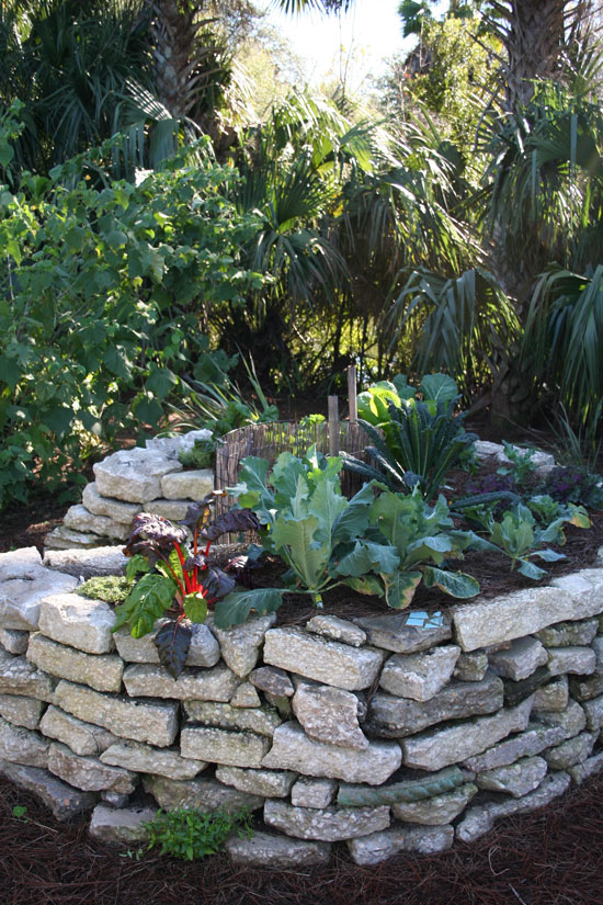 The Rainforest Garden: 7 Garden DIY Ideas from the Jacksonville ...