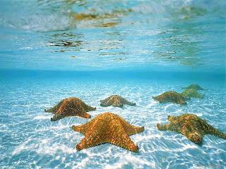 su altı manzara resimleri su altı manzarası deniz yıldızı