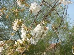 Virágzó természet