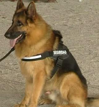Perros adiestrados para proteger a mujeres maltratadas