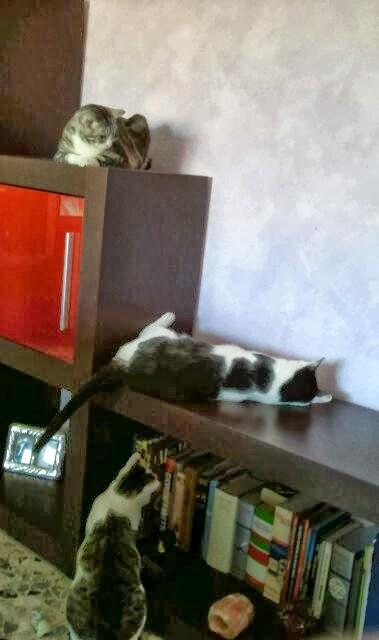 I miei tesori nel blog di Fiore: OK ANIMALI