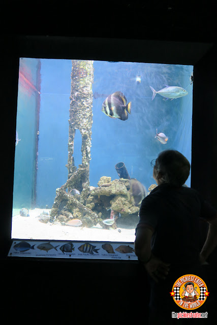 Ocean adventure aquarium