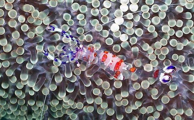 Vida Bajo el Mar
