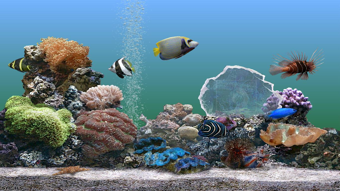 Aquarium Fish Screensaver