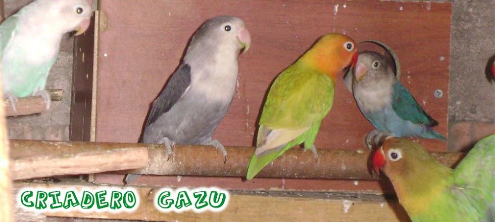 Criadero Gazu