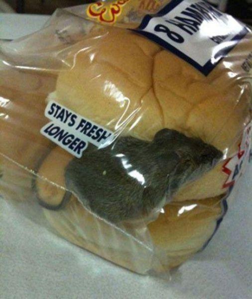 Ratinho de brinde no pão