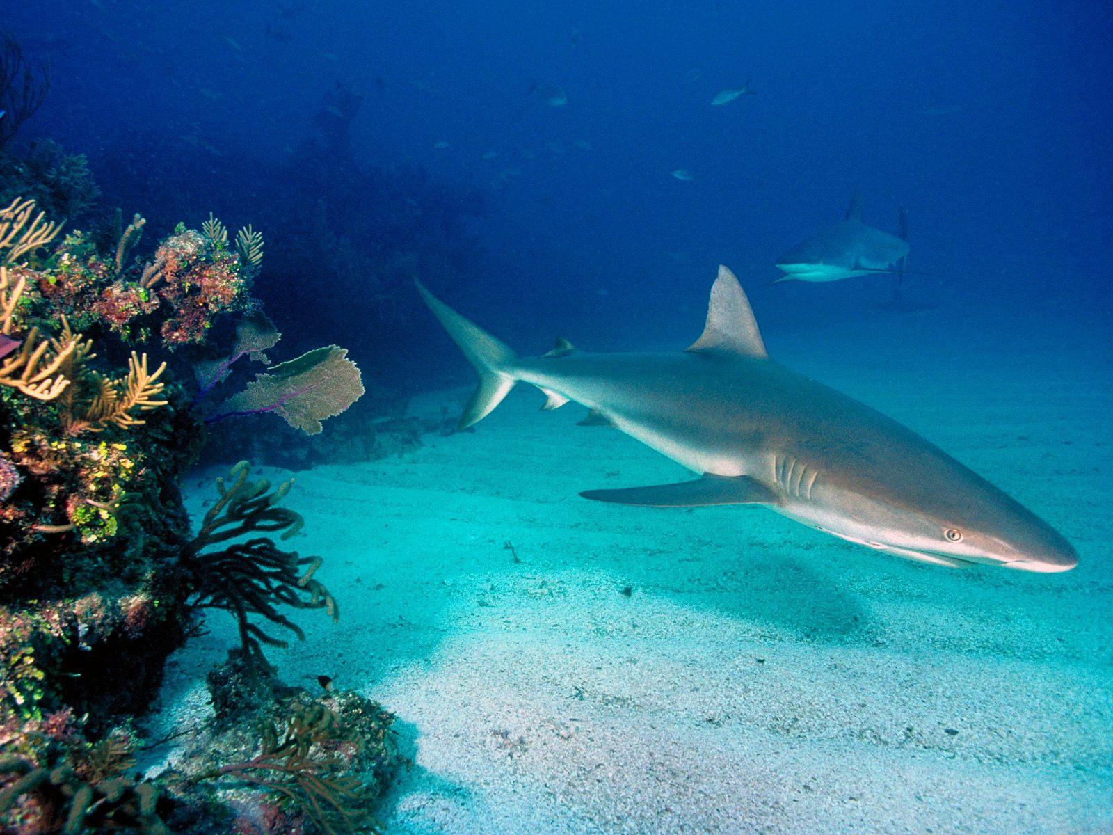 http://2.bp.blogspot.com/-Q_7WC4BCxAA/TkrLamrLxcI/AAAAAAAALjo/7VRQFXNLMoA/s1600/Underwater+Wallpapers+%25286%2529.jpg