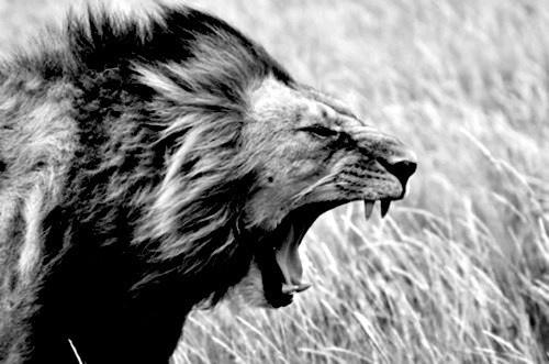 Η ενέργεια του θυμού και η μετατροπή του σε δύναμη.