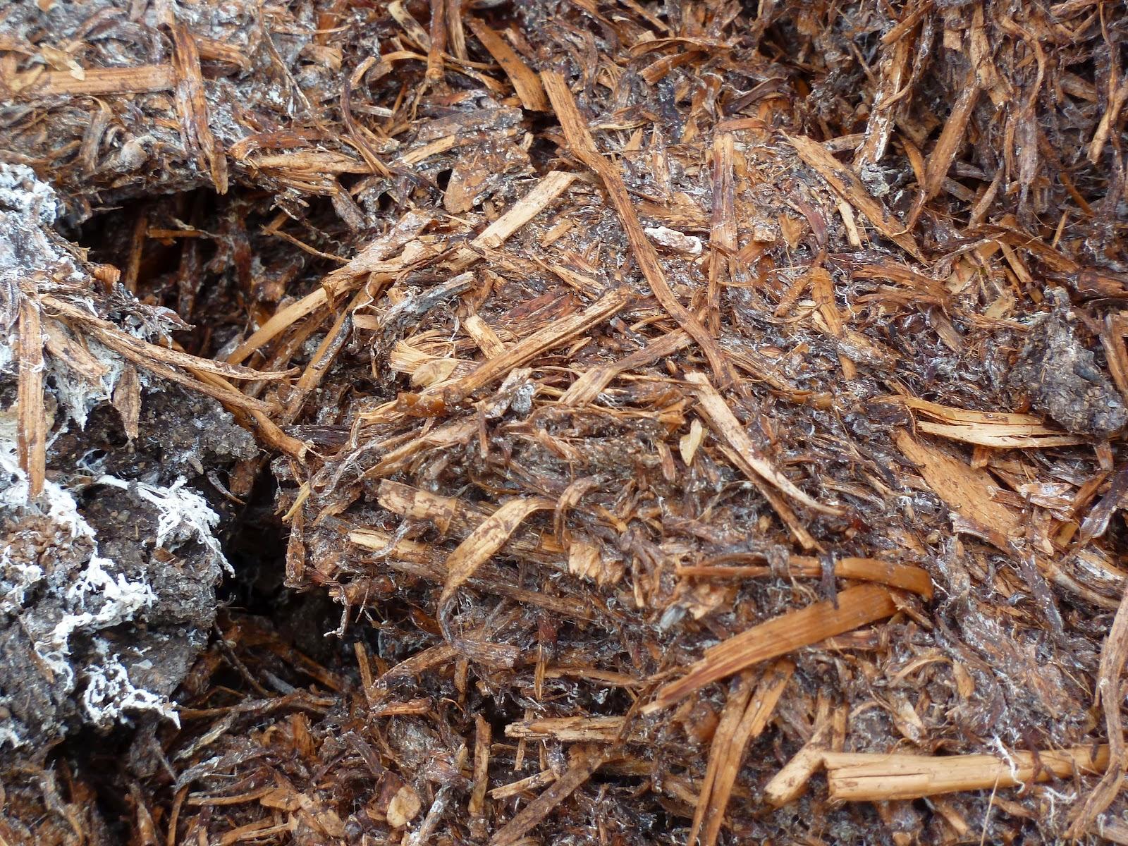 How to grow mushrooms the garden of eaden for Mushroom soil