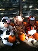 Kaelyn, Liam & Jackson- Halloween 2011