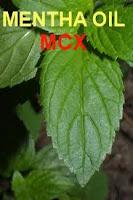 MCX Mentha tips
