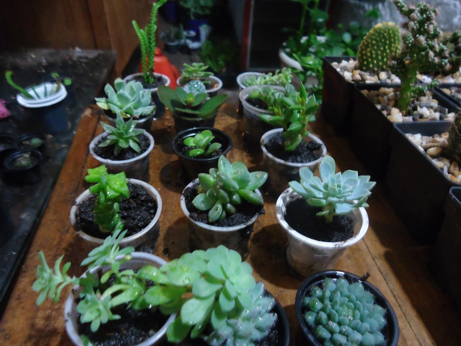 suculentas y cactus regalos y recordatorios