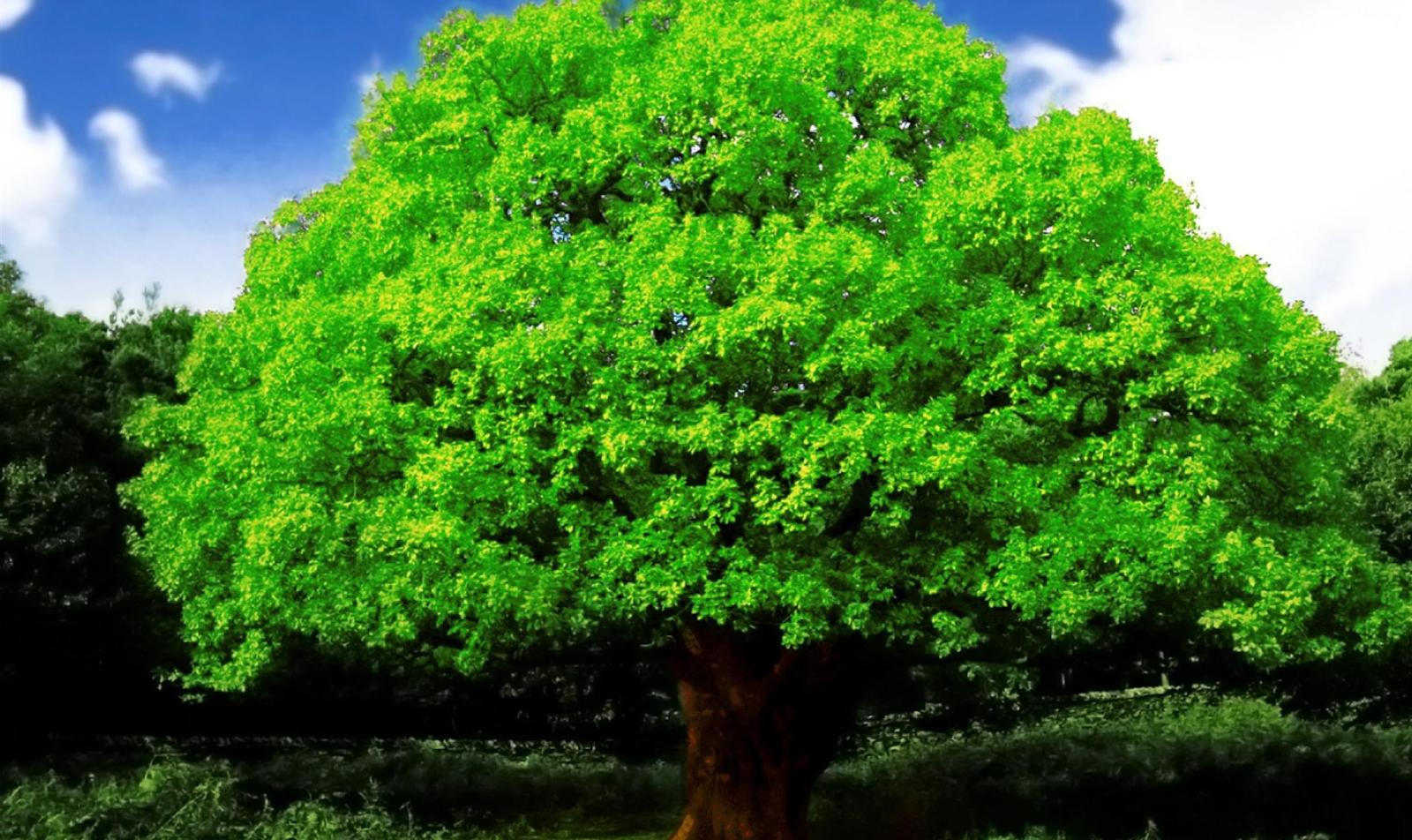 Красивые деревья