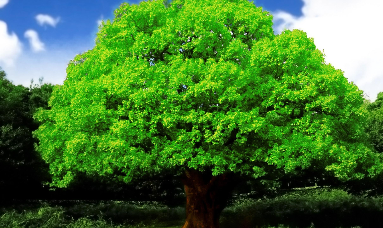 Best hd every wallpapers beautiful big green tree hd for Tree wallpaper