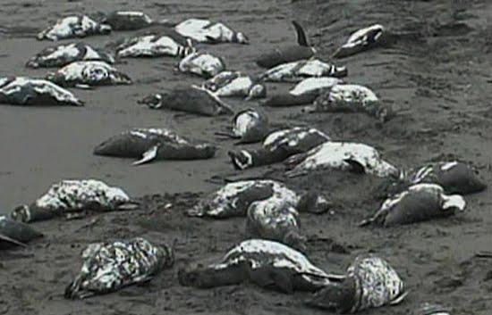 Muertos De Hambre - SEONegativo.com