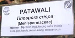 Batang Wali