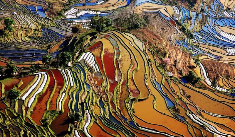 Rice field terraces dreams destinations for The terraces 2