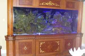 Giant aquariums 900 gallon custom reef aquarium 48000 for 150 gallon fish tank for sale craigslist