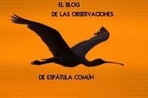 Blog Observaciones Espátula