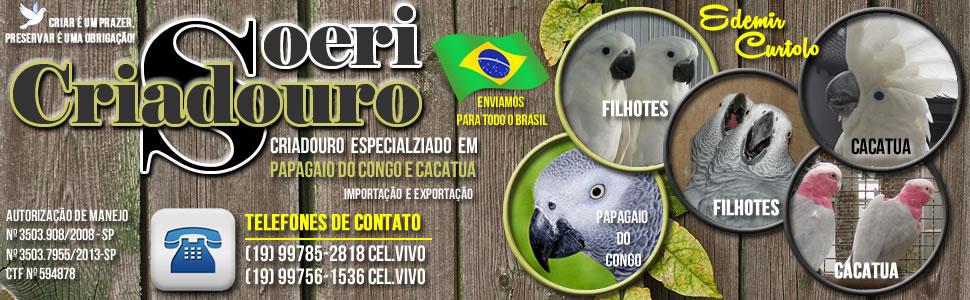 Criadouro Soeri - Papagaio do Congo e Cacatua